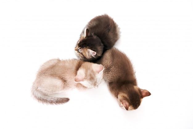 Van bovenaanzicht van drie kittens.