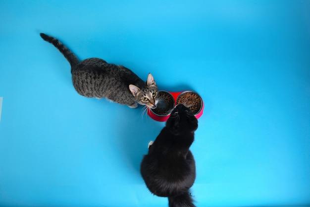 Van bovenaf bekijken bij twee schattige grijs en wit gestreepte en zwarte kittens zitten en eten van droog voedsel