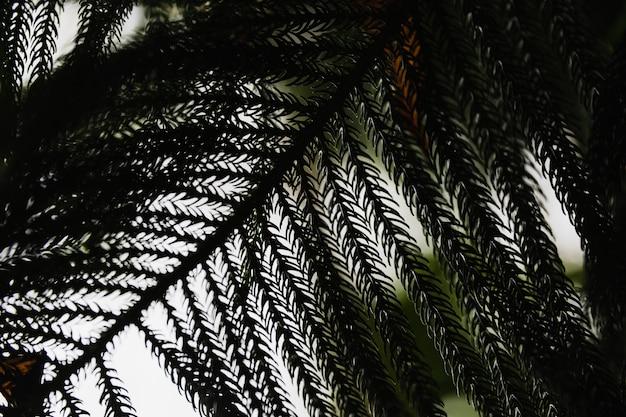 Van bovenaf conifer tak
