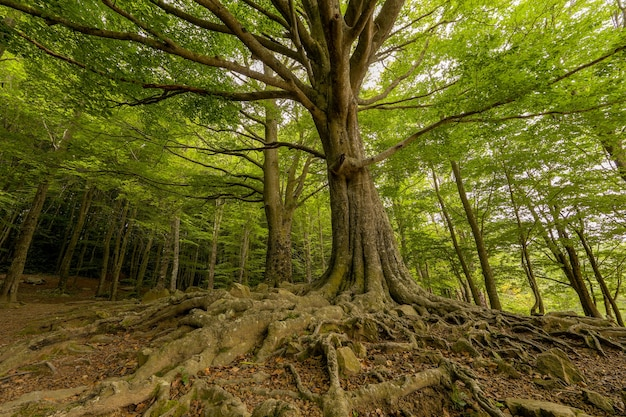 Van onderen landschap van een bos van groene bomen met wortels in de lente
