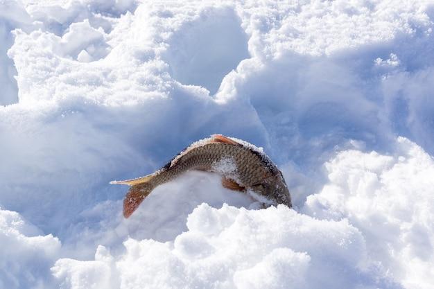 Vangt vissen op lake cildir (cildir golu) kars turkije