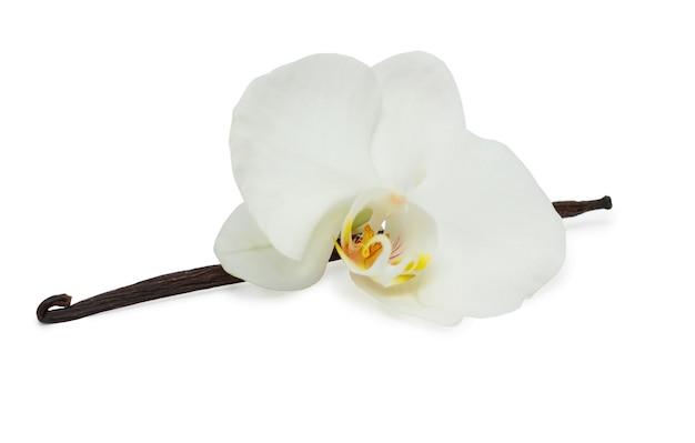 Vanillebonen en met witte orchidee