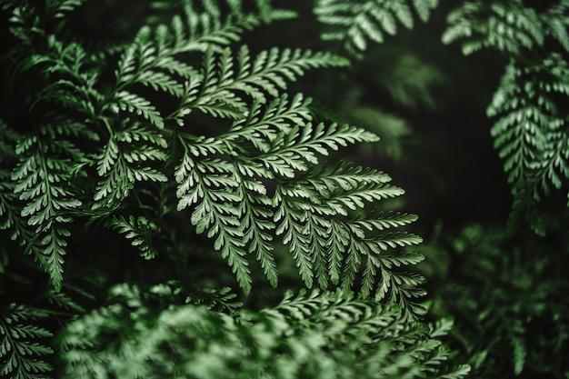Varenblad in close-up shot natuur achtergrond