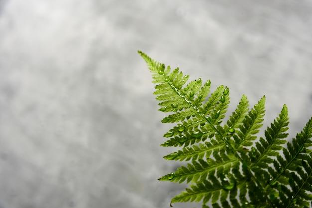 Varenblad op grijs