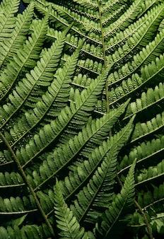 Varenblad textuur behang. groene natuur achtergrond