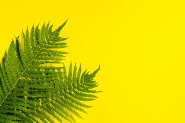 Varenbladeren of palmen op een gele achtergrond. concept van de tropen. kopieer ruimte. plat lag, bovenaanzicht