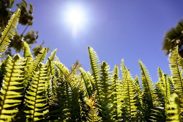 Varens in de zon lijden onder de gevolgen van klimaatverandering