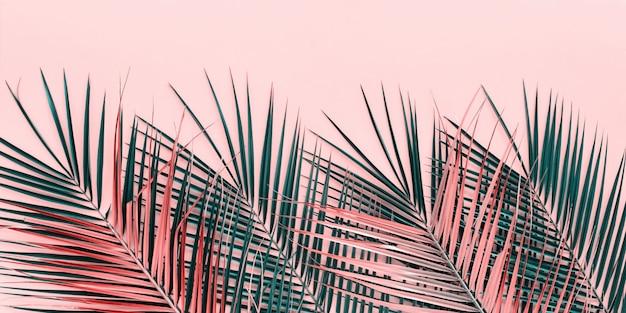 Variaties tropische palmbladeren plat leggen bovenaanzicht
