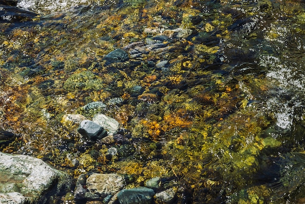 Varicolored achtergrond van steenachtige bodem van transparante bergkreek