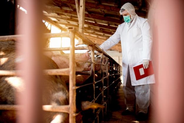 Varkens dierenarts met notities die varkens onderzoeken bij varkensstal.