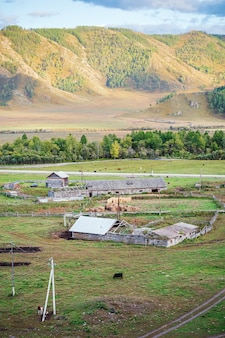 Veeboerderij in dorp rusland berg altai ongudaysky district dorp bichiktuboom