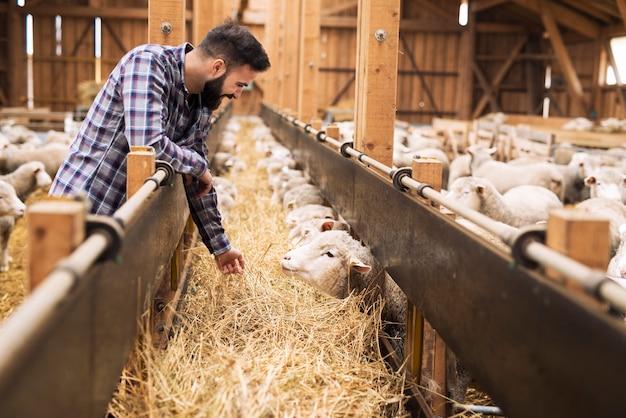 Veehouder en schapen