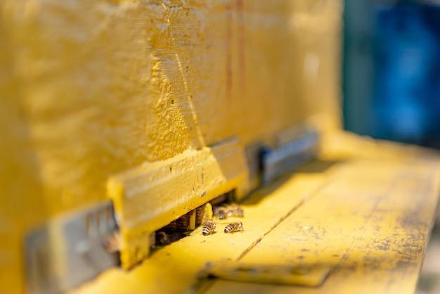Veel bijen vliegen rond de korf. bijen vliegen in uly.