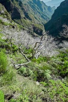 Veel droge bomen in madeira portugal