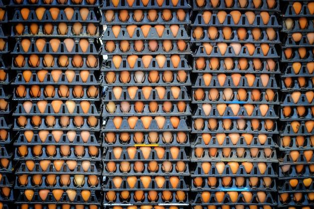 Veel eieren op de boerderij