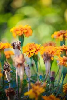 Veel foto's van bloemen. collage. selectieve aandacht