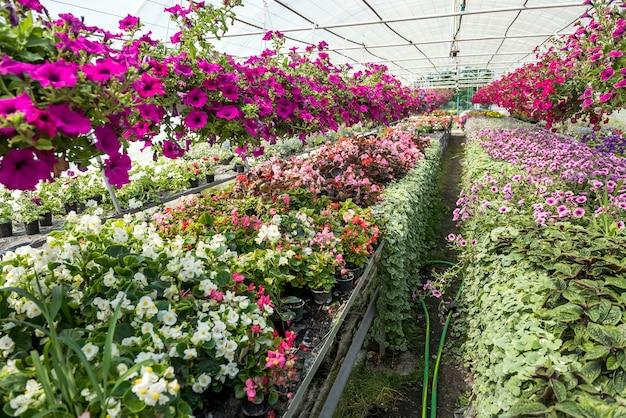 Veel gekleurde bloemen tijdens seizoensbloei in kas