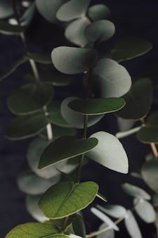 Veel groene bladeren op twijgen