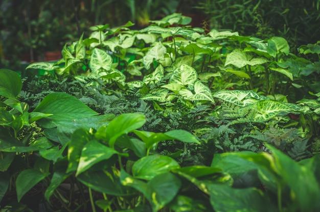 Veel groene planten. planten groene achtergrond. tuinieren in serre. botanische tuin, bloementeelt, tuinbouwconcept