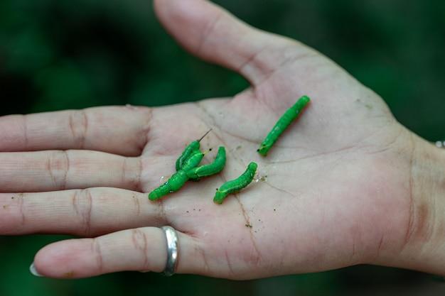 Veel groene wormen op de hand
