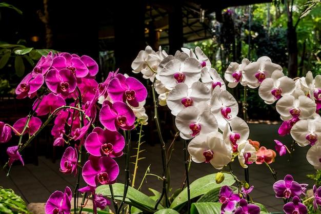 Veel kleur en soort orchideebloem