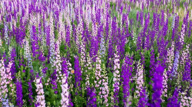 Veel kleurrijke bloemen in de wei in het voorjaar
