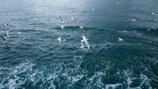 Veel meeuwen vliegen boven het wateroppervlak met schuim en kleine golven