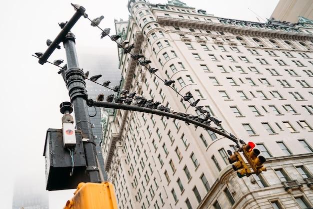 Veel mooie vogels op een verkeerslicht met een enorm wit gebouw op de achtergrond - onderaanzicht