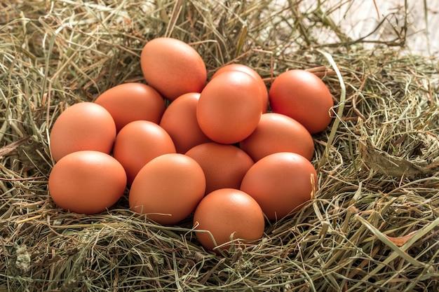 Veel natuurlijke bruine kip op een boerderij in het nest