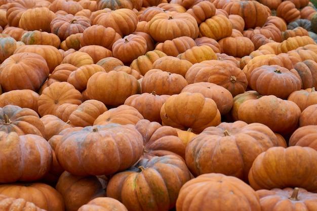 Veel oranje pompoenen wachten op verkoop op de groentemarkt