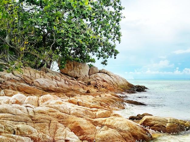 Veel oranje rotsen en groene boom op de achtergrond van de zee en de lucht op een zonnige dag.