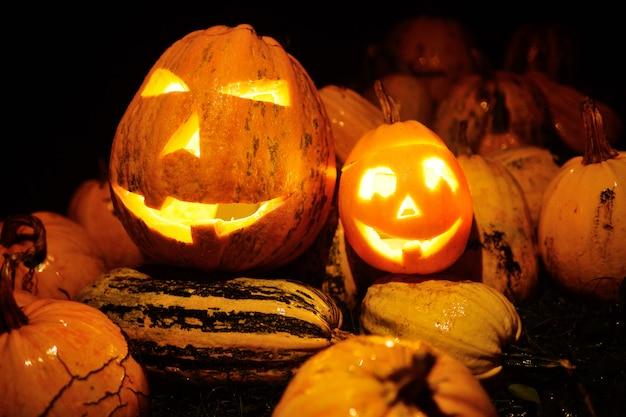 Veel pompoenen voor halloween