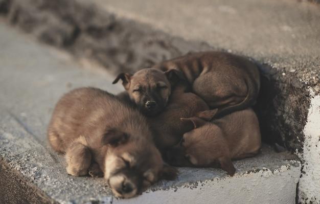 Veel puppy's die gelukkig slapen