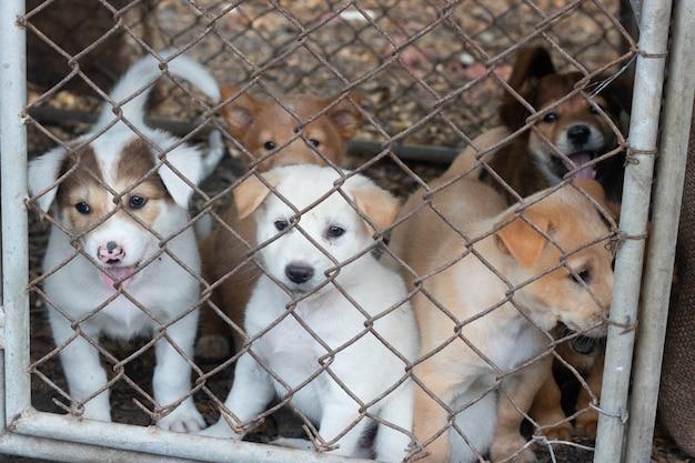 Veel puppy's in een kooi
