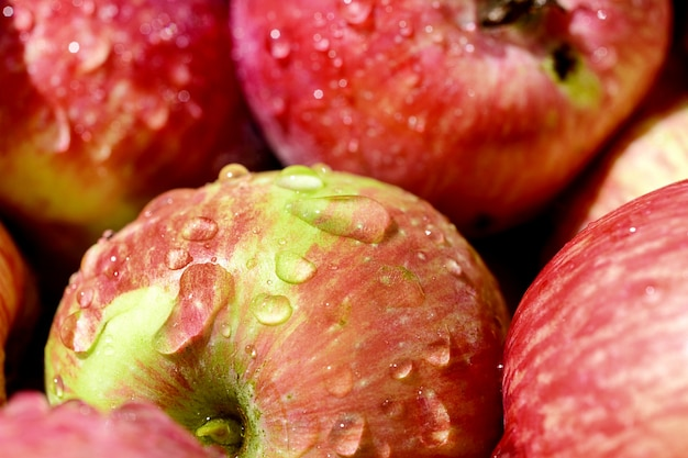Veel rode rijpe appels bedekt met transparante waterdruppeltjes.