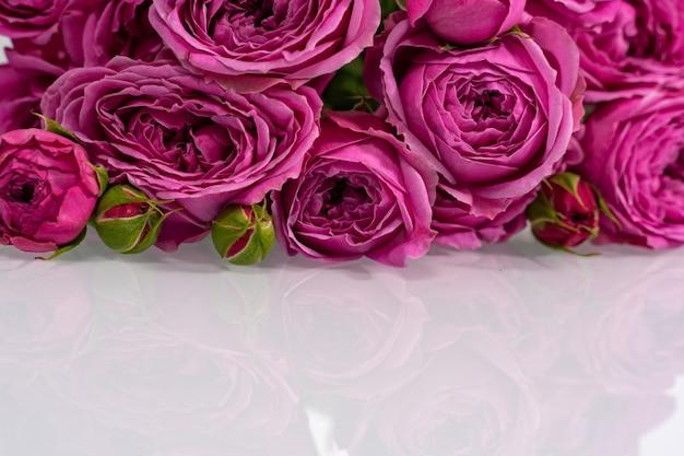 Veel roze rozen op een glanzend oppervlak met reflectie. lay-out voor ontwerp met plaats voor tekst