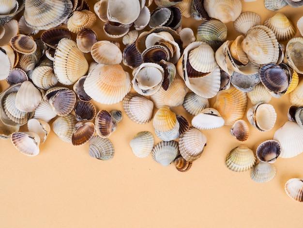 Veel schelpen. veel kleine schelpen, bovenaanzicht