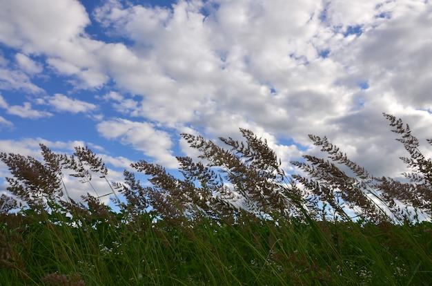Veel stengels van groen riet groeien uit het rivierwater