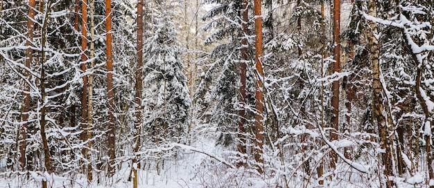 Veel twijgen en takken bedekt met pluizige witte sneeuw, prachtig besneeuwd winterbos
