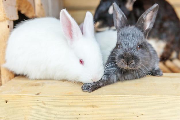 Veel verschillende kleine voedende konijnen op dierenboerderij in konijnenhok