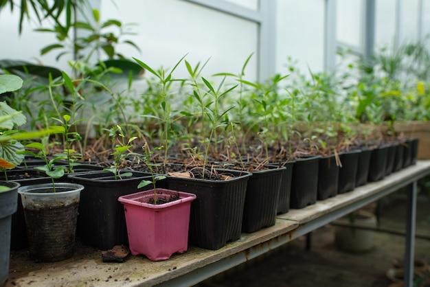 Veel verschillende potten met planten in de botanische tuin