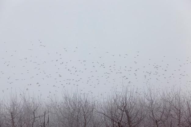 Veel vogels leven in de tuin, mistig weer en slecht zicht, fruitbomen zijn appelbomen in het winterseizoen