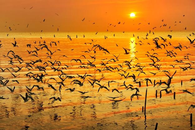 Veel zeemeeuw die over overzees in zonsondergangtijd vliegt