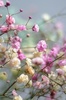 Veelkleurig boeket van gypsophila bloemen. minimale samenstelling van gypsophila bloemen op bleke pastel achtergrond.