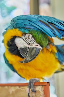 Veelkleurige ara papegaai zittend op kooi close-up.