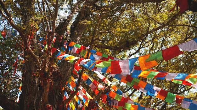 Veelkleurige feestelijke vlaggen hangen op de achtergrond van bomen, grote dennen en blauwe lucht.
