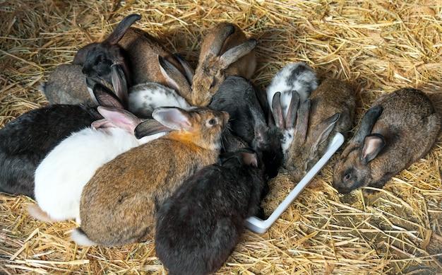 Veelkleurige konijnen in een dierentuinkooi eten voedsel