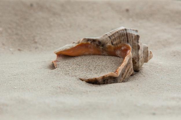 Veelkleurige rivierschelpen liggen chaotisch op het zand naast de zee