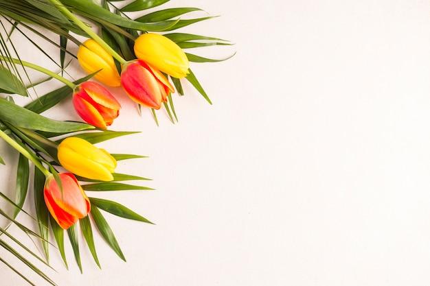 Veelkleurige tulpen en groene bladeren op lichte achtergrond