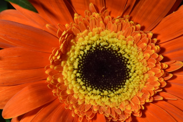 Veelkleurige veldbloem close-up